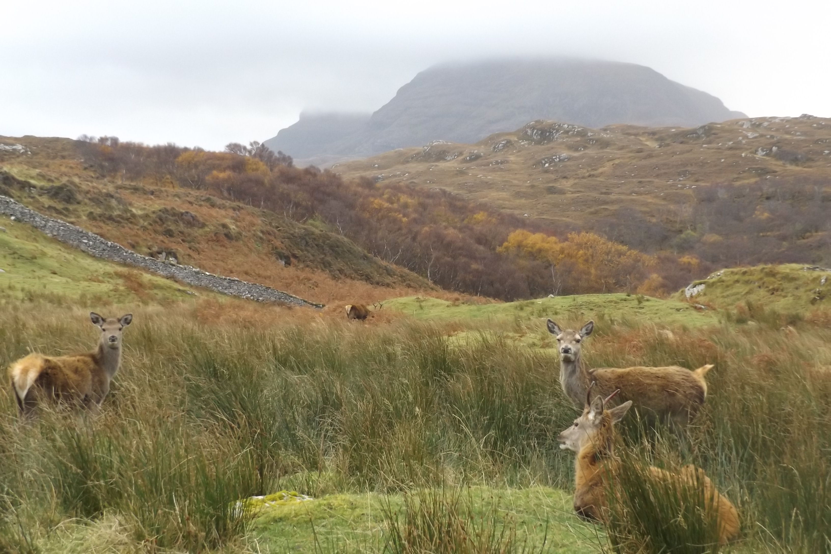 APDMG Deer Photo- Deer below Quinag